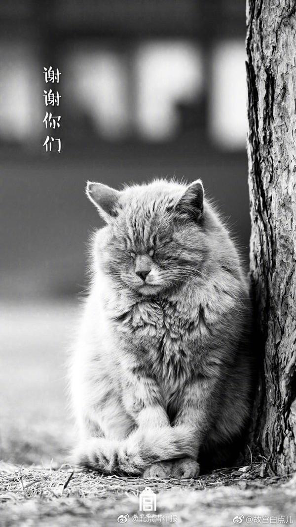 故宫猫白点儿去世 网友祈福