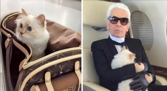 老佛爷希望猫继承遗产 网友:从此走上猫生巅峰!