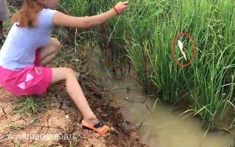 用一米长的稻草钓鱼!