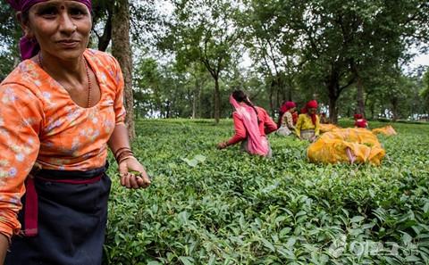 【组图】实拍印度农民真实生活 直击印度生活现状!