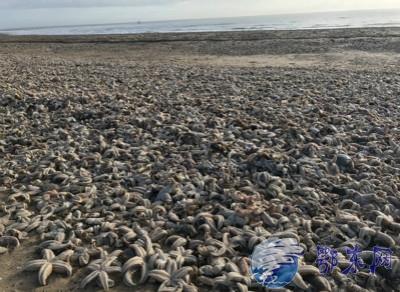 英国海滩现死海星,场面令人震惊!