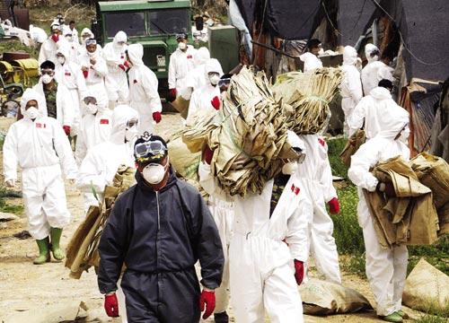 韩国紧急扑杀家禽  禽流感度来袭
