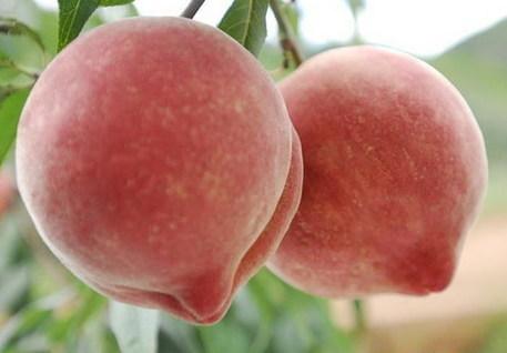 桃子的功效与作用及禁忌  桃子的营养价值