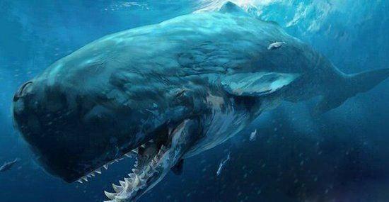 世界上最大的动物 最大的动物是什么?
