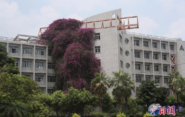 惊艳!广西大学鲜花瀑布18年长30米