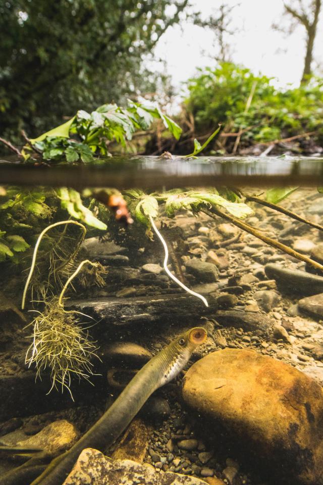 英国花园发现神秘吸血生物