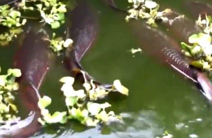 男子钓鱼发现怪物