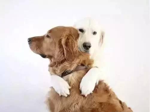 """狗相亲要做亲子鉴定,狗""""相亲""""也复杂!"""
