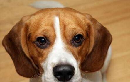 女子痛失爱狗 怀孕后却发现狗狗在肚子里!