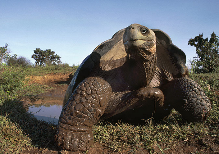 最长寿的动物是什么?世界上最长寿的十大动物盘点!