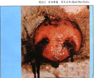 安徽宣城非洲猪瘟 如何控制?