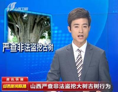 山西破盗挖大树案  打掉17个犯罪团伙