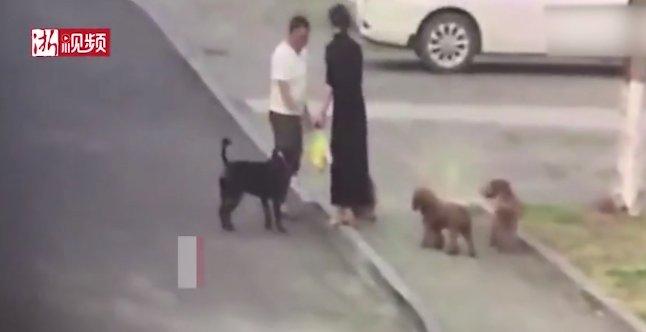 【护狗反被咬】护狗反被咬案件详情