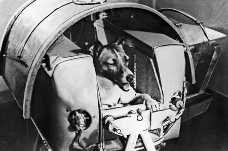 进入太空先驱的动物盘点!