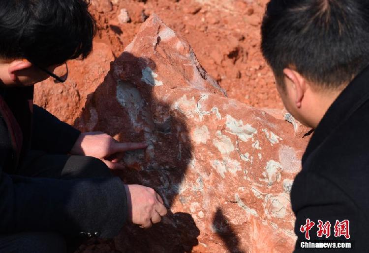 江西工地发现20余枚恐龙蛋化石