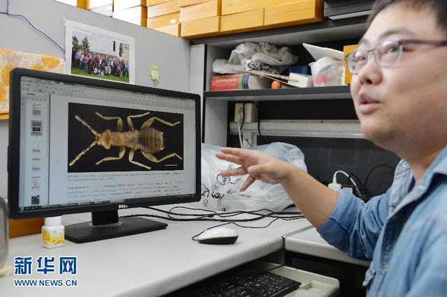 上海现昆虫新物种  与众不同