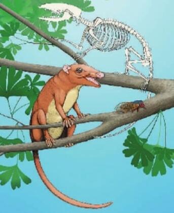科学家发现混元兽  约1.26亿年前哺乳动物!